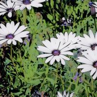 Flowerdelic.jpg